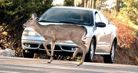 Coberturas de coche